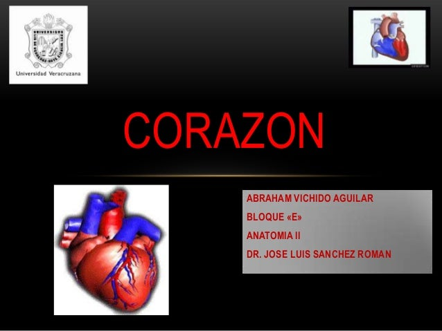 CORAZON ABRAHAM VICHIDO AGUILAR BLOQUE «E» ANATOMIA II DR. JOSE LUIS SANCHEZ ROMAN