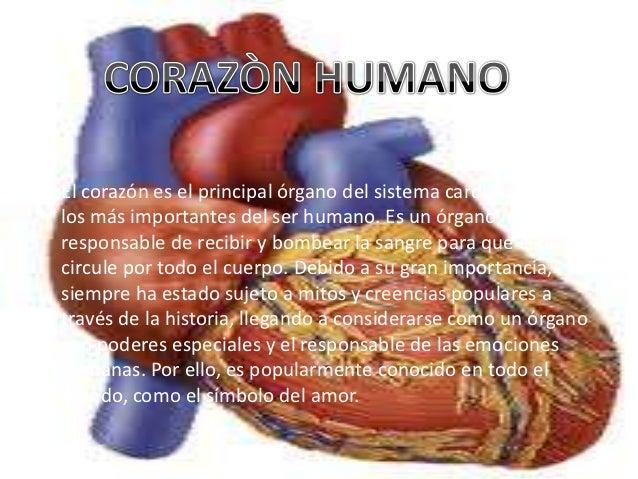 Corazón Humano órgano Vital