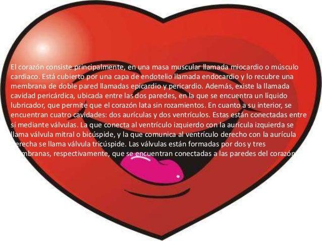corazón humano, órgano vital