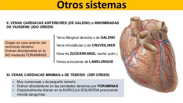 Anatomía de corazón y grandes vasos