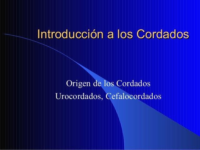 Introducción a los CordadosIntroducción a los Cordados Origen de los Cordados Urocordados, Cefalocordados