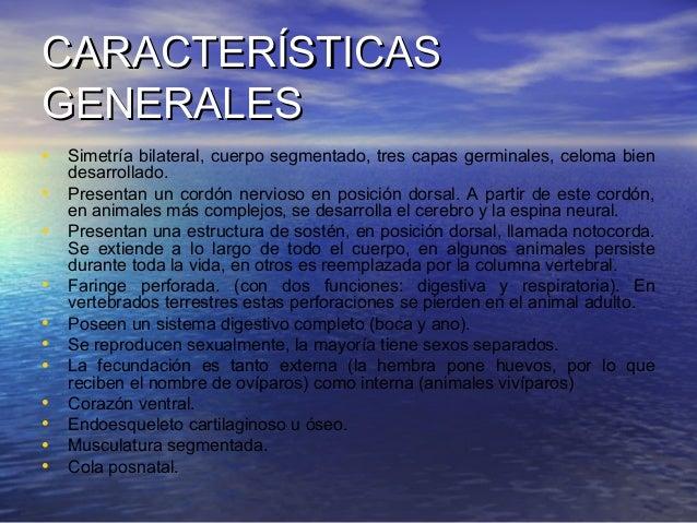 CARACTERÍSTICAS GENERALES • Simetría bilateral, cuerpo segmentado, tres capas germinales, celoma bien • • • • • • • • • • ...