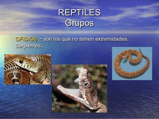 REPTILES Grupos • OFIDIOS.- son los que no tienen extremidades. Serpientes.