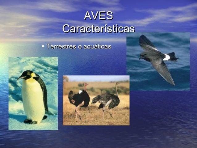 AVES Características • Terrestres o acuáticas