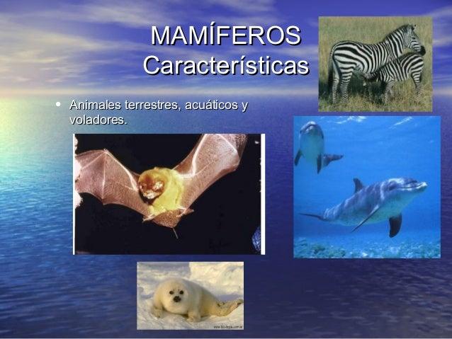 MAMÍFEROS Características • Animales terrestres, acuáticos y voladores.