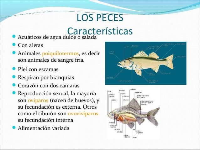 Cordados 2 for La reproduccion de los peces