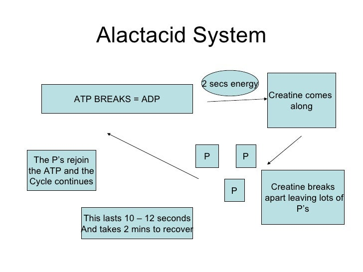 the atp-pc system resynthesis Atp-pc system breakdown of pc gives off energy quick resynthesis of atp atp-pc energy system 40 / 5 energy systems.