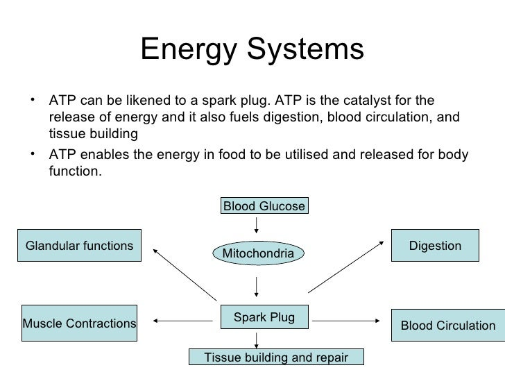 the atp-pc system resynthesis The resynthesis of cp during recovery normally occurs rapidly, but is totally inhibited if the local circulation to the muscle is occluded the limiting factor for cp resynthesis which could be a low intramuscular ph or availability of oxygen has been investigated in the present study.