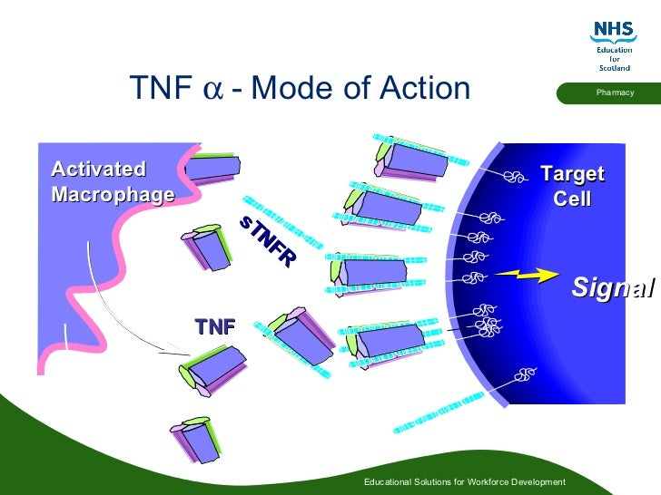 Mechanism of Action of TNF Blockade - Rheumatoid Arthritis