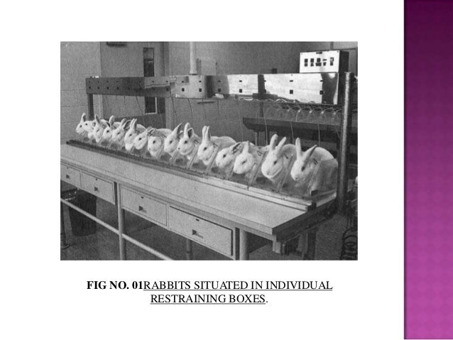 FIG NO. 01RABBITS SITUATED IN INDIVIDUAL RESTRAINING BOXES.
