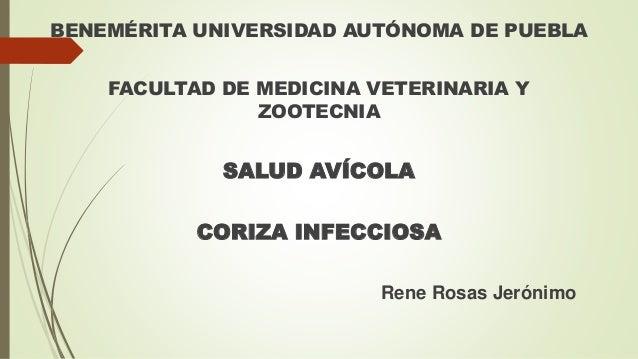 BENEMÉRITA UNIVERSIDAD AUTÓNOMA DE PUEBLA FACULTAD DE MEDICINA VETERINARIA Y ZOOTECNIA SALUD AVÍCOLA CORIZA INFECCIOSA Ren...