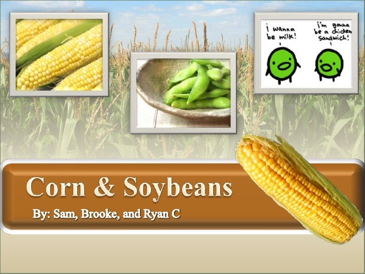 Corn & Soybeans<br />By: Sam, Brooke, and Ryan C<br />
