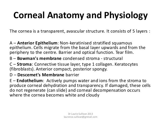 Cornea and ocular surface anatomy and physiology