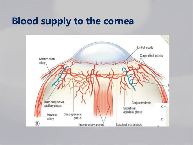 Corneal physiology in relation to contact lens wear