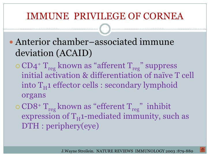 anterior chamber associated immune deviation pdf