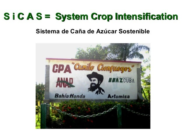 S i C A S = System Crop IntensificationS i C A S = System Crop Intensification Sistema de Caña de Azúcar Sostenible