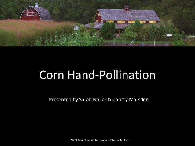 Presented by Sarah Noller & Christy Marsden 2012 Seed Savers Exchange Webinar Series Corn Hand-Pollination