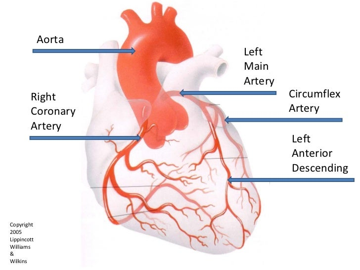 Coronary Arteries 12 Leads