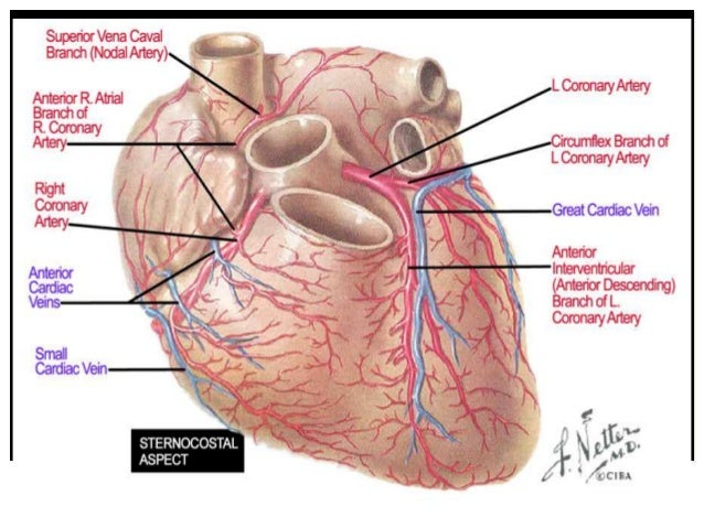 Coronary Anatomy For Interventional Cardiologists Toufiqur Rahman