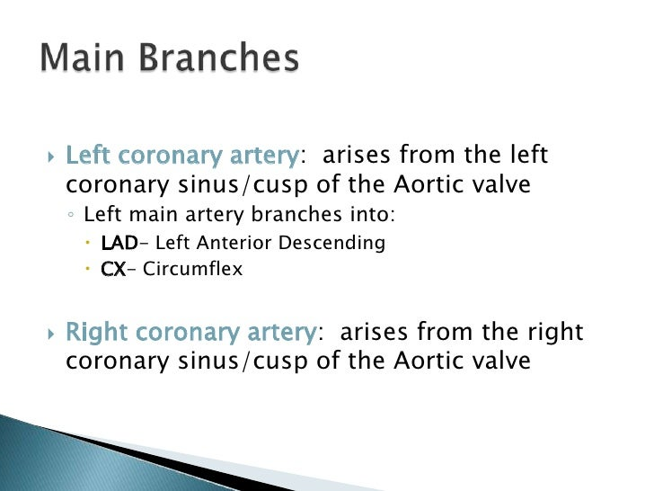 Coronary Arteries