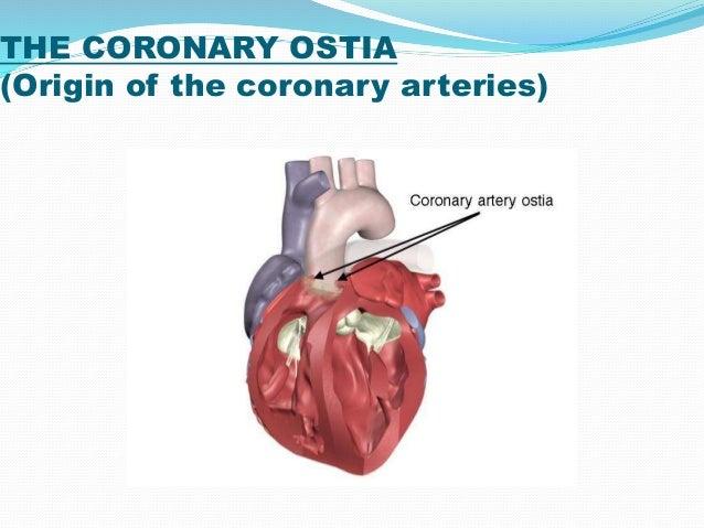 Coronary Circulation 14 10 14