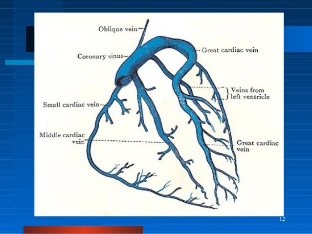 Coronary Sinus Diagram Schematics Wiring Diagrams