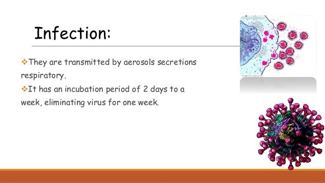 They are transmitted by aerosols secretions respiratory. It has an incubation period of 2 days to a week, eliminating vi...
