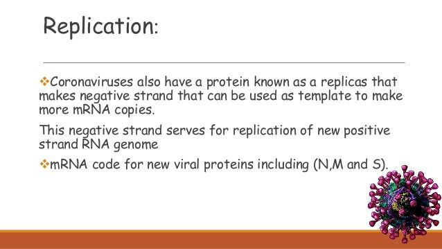 Coronaviruses also have a protein known as a replicas that makes negative strand that can be used as template to make mor...