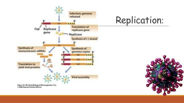 :Replication