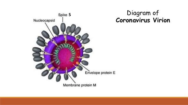 Corona Diagramm