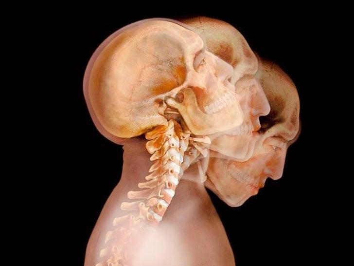 Corpo Humano Transparente Slide 1