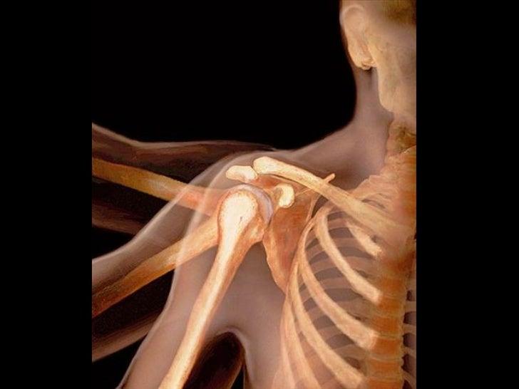 Corpo Humano Transparente Slide 2