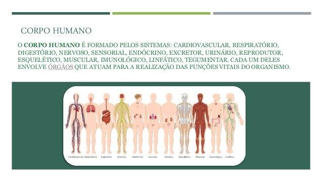 O CORPO HUMANO É FORMADO PELOS SISTEMAS: CARDIOVASCULAR, RESPIRATÓRIO, DIGESTÓRIO, NERVOSO, SENSORIAL, ENDÓCRINO, EXCRETOR...