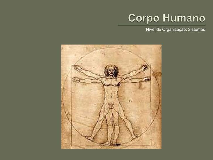 Corpo Humano<br />Nível de Organização: Sistemas<br />