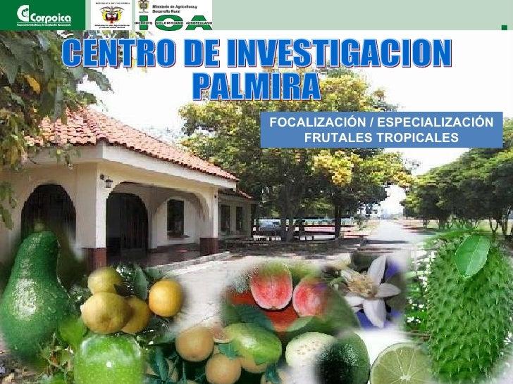   CENTRO DE INVESTIGACION  PALMIRA FOCALIZACIÓN / ESPECIALIZACIÓN FRUTALES TROPICALES