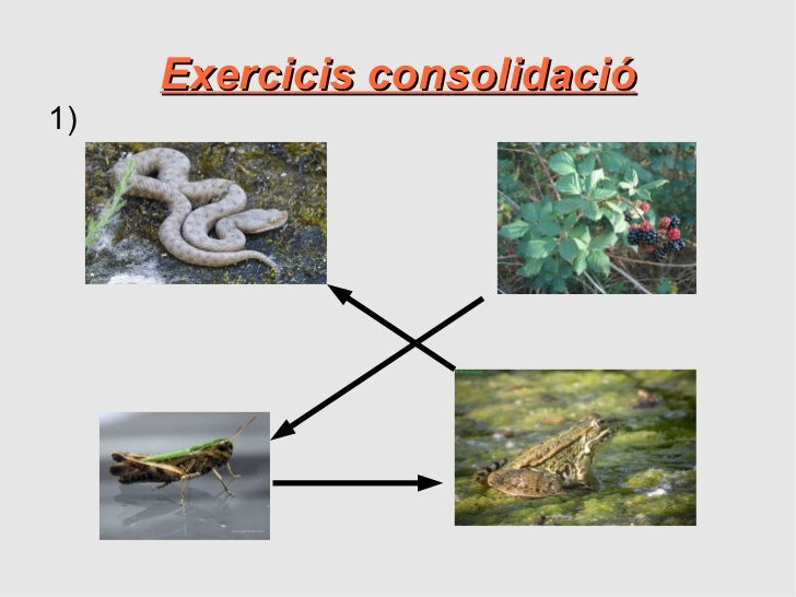 Exercicis consolidació1)