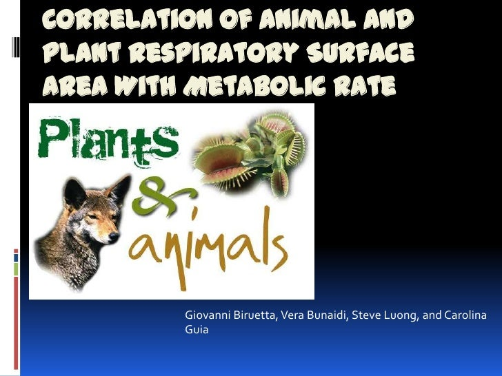 Correlation of Animal andPlant Respiratory SurfaceArea With Metabolic Rate         Giovanni Biruetta, Vera Bunaidi, Steve ...