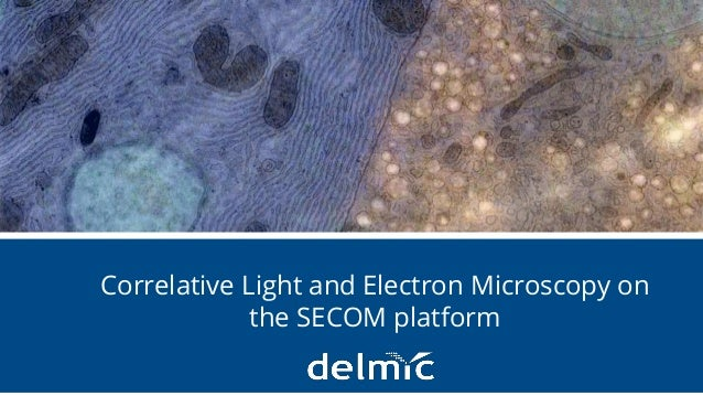Integration without compromise 1 Correlative Light and Electron Microscopy on the SECOM platform