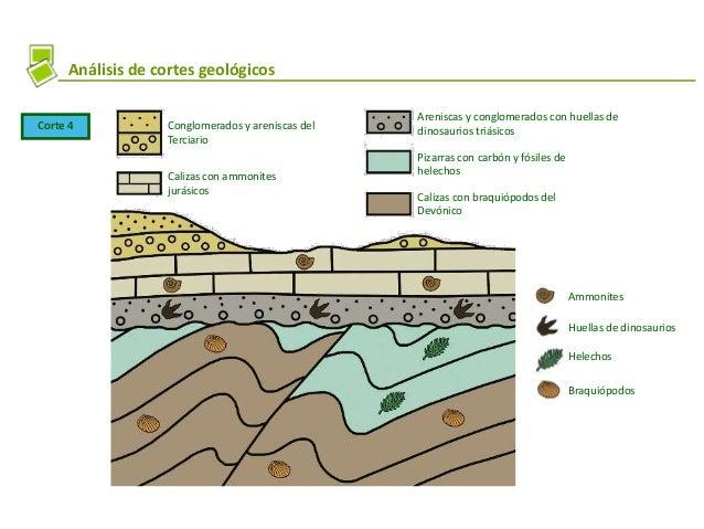 Análisis de cortes geológicos Corte 4 Conglomerados y areniscas del Terciario Calizas con ammonites jurásicos Areniscas y ...