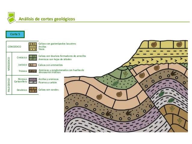 Análisis de cortes geológicos Corte 5 Calizas con gasterópodos lacustres Arcillas Yesos Calizas con bivalvos formadores de...