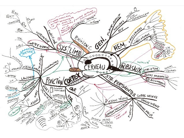 mind maps cartes mentales et cortex aires associatives dominance