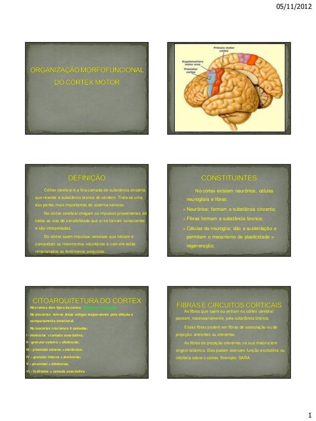 05/11/2012 1 Córtex cerebral é a fina camada de substância cinzenta que reveste a substância branca do cérebro. Trata-se u...
