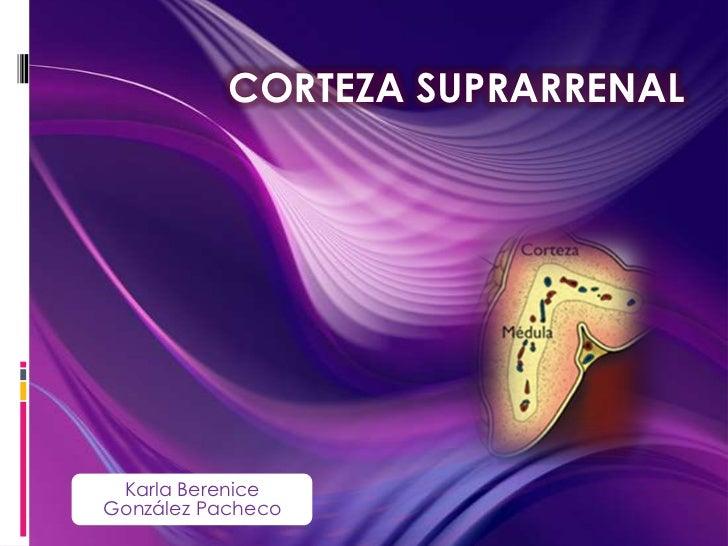 CORTEZA SUPRARRENAL Karla BereniceGonzález Pacheco