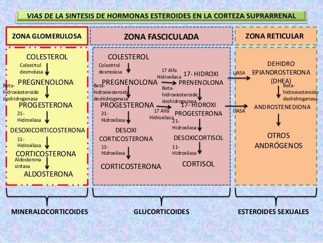 biosintesis de esteroides en el ovario