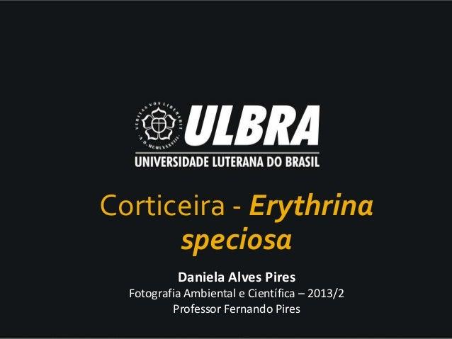 Daniela Alves Pires Fotografia Ambiental e Científica – 2013/2 Professor Fernando Pires Corticeira - Erythrina speciosa