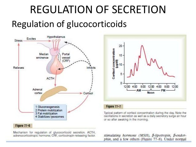 corticosteroids secreted by the adrenal cortex