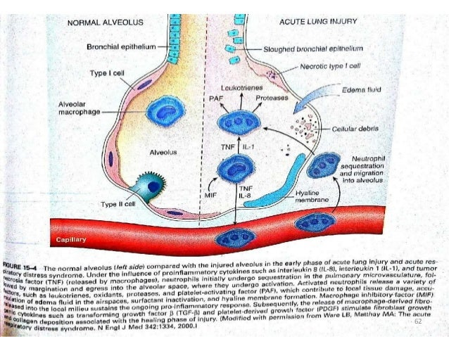 role of inhaled steroids in vascular airway remodelling in asthma and copd