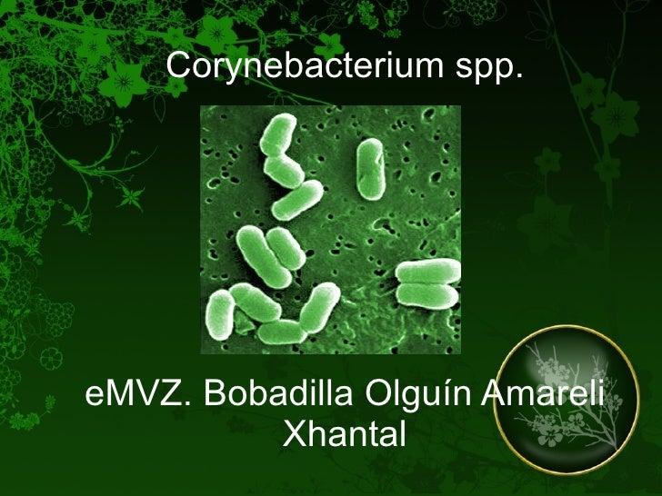 Corynebacterium spp. eMVZ. Bobadilla Olguín Amareli Xhantal