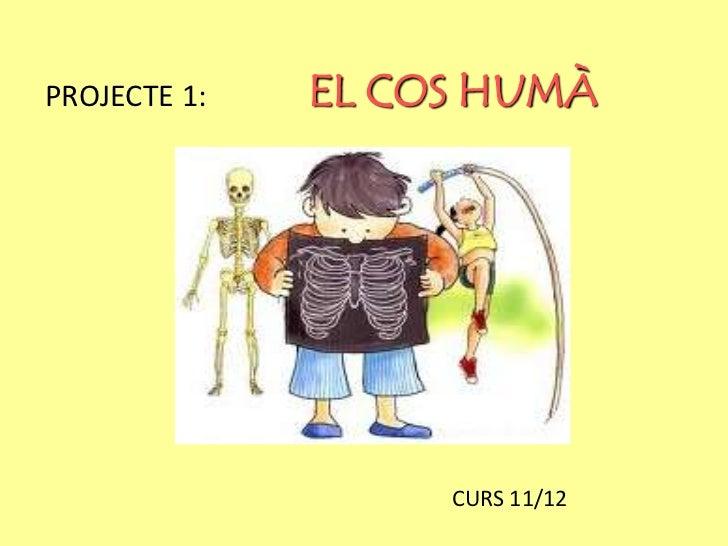 PROJECTE 1:   EL COS HUMÀ                   CURS 11/12