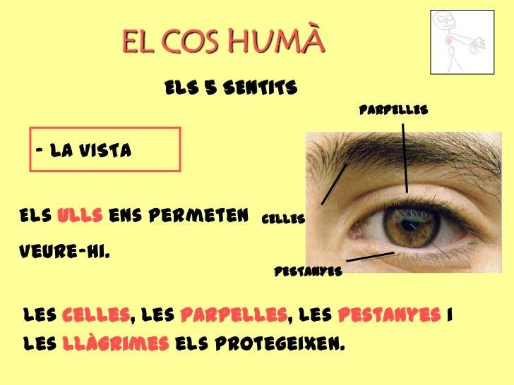 EL COS HUMÀ              ELS 5 SENTITS                                     PARPELLES - LA VISTAEls ulls ens permeten   CEL...